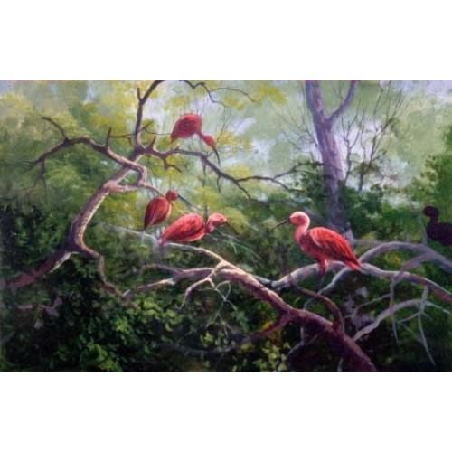 8943 IBIS BIRDS